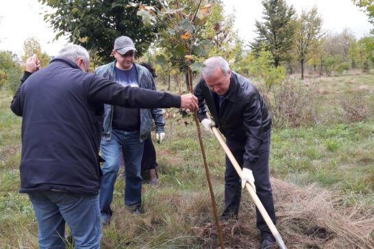Во Владикавказе в рамках акции «Лес Победы» посадили клены и каштаны