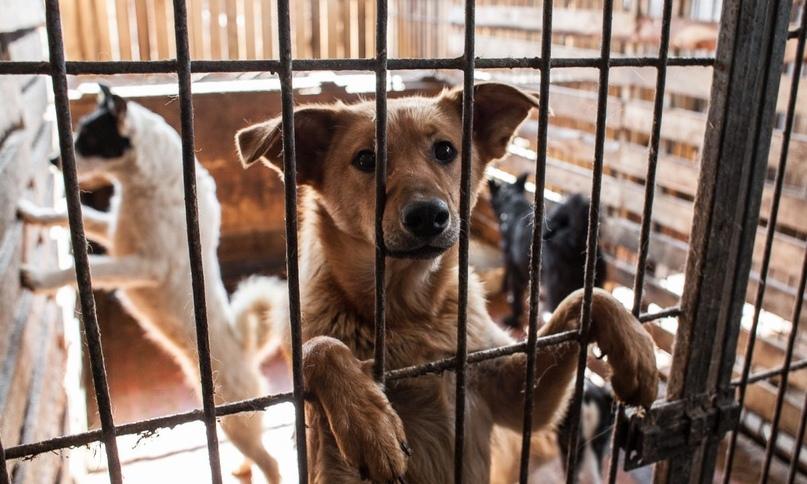Три приюта для бездомных животных планируют построить в Северной Осетии