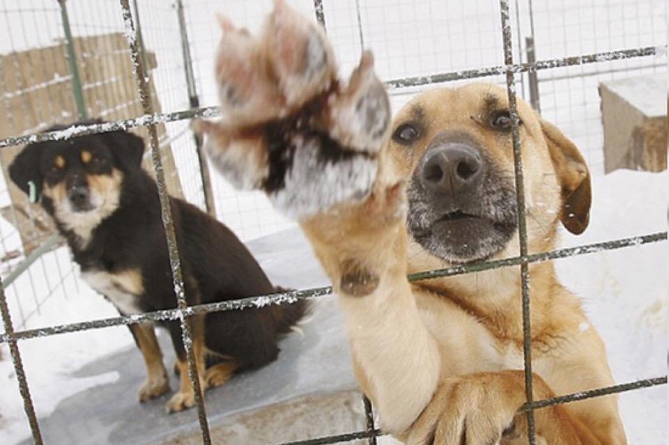 Служба по отлову животных превышала концентрацию усыпляющего вещества, что приводило к смерти собак