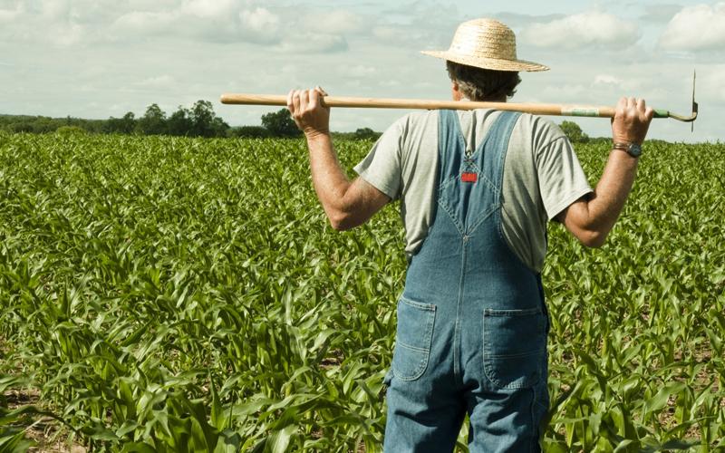 Фермера из Чиколы обвиняют в том,  что он растратил на собственные нужды грант в 18 миллионов рублей